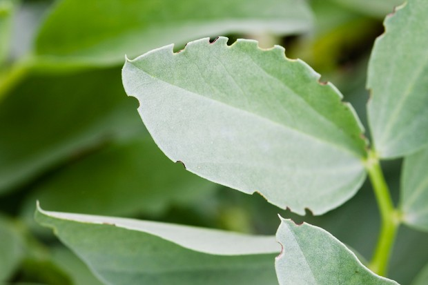 weevil-damage-on-leaf-2