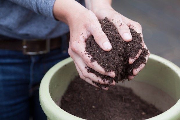 How to pot up plants - adding compost