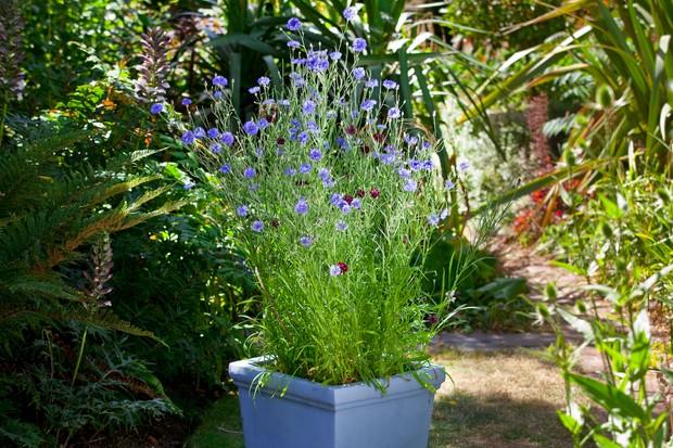 Wildflower pot display