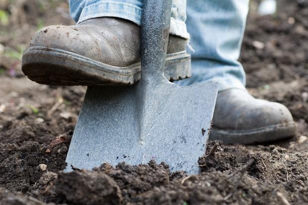 Digging in the organic matter