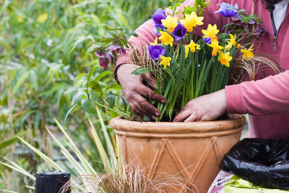 10 Spring Container Ideas - BBC Gardeners' World Magazine