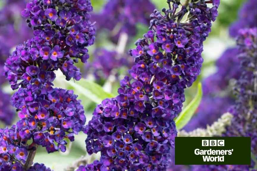 How to plant shrubs in borders