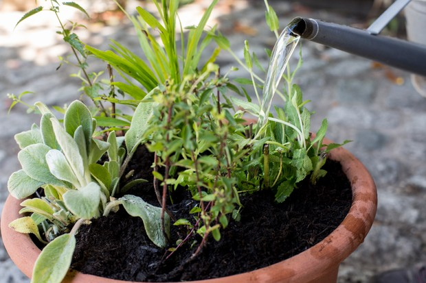 watering-wildlife-container-2