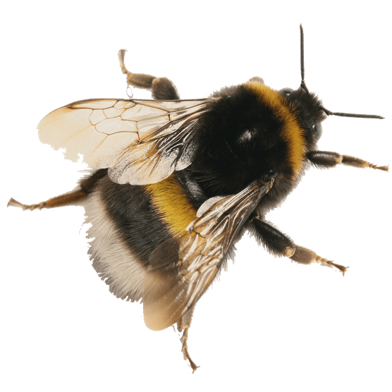 Bumblebee cutout. Photo: Getty Images.