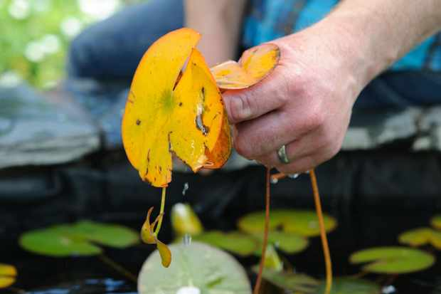 tidying-a-pond-in-autumn-2