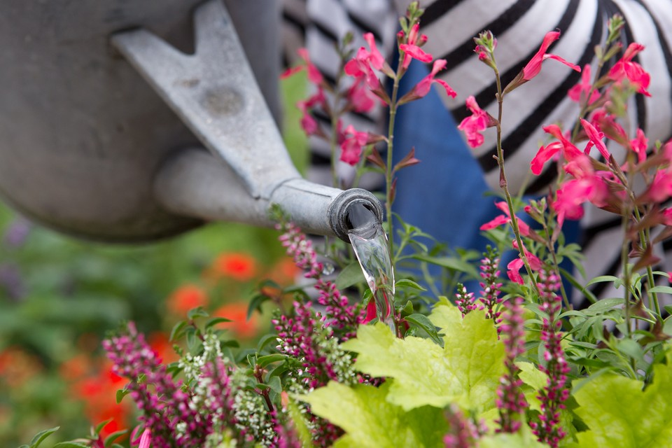 Garden Guide To Summer Watering Bbc, How Often Do Bedding Plants Need Watering