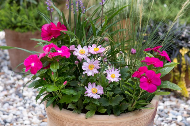 container-for-shade-planted-with-lilyturf-anemones-and-catharanthus-2