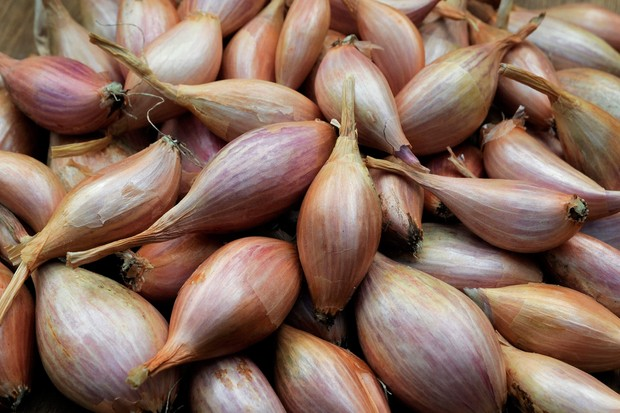 A harvest of shallots