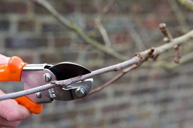 pruning-back-last-seasons-growth-2