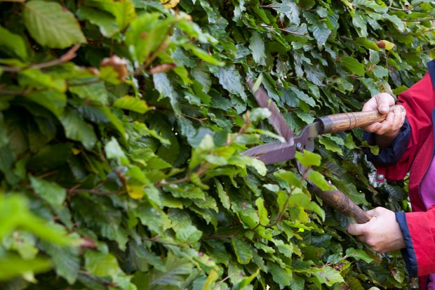 tips-for-pruning-a-deciduous-hedge-6