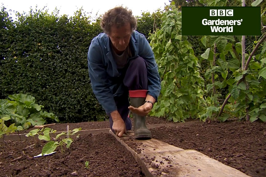 How to grow turnips from seed video