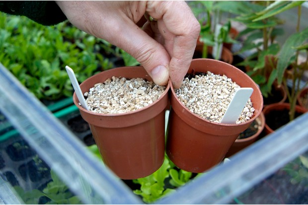 Placing the pots in a cold frame