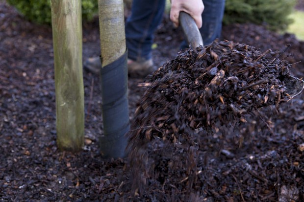 Feeding plants - adding manure