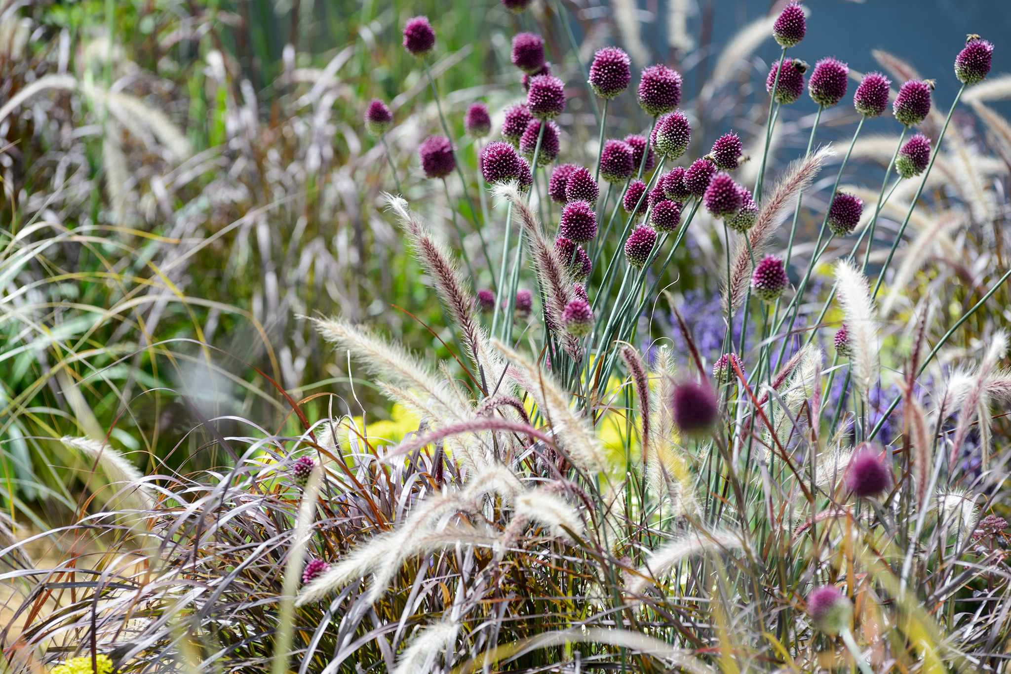 Plant Combinations: Flowers and Grasses