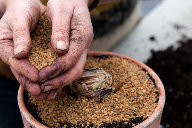 Adding grit to the surface of the compost