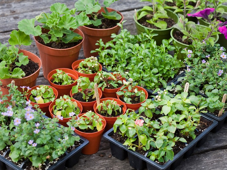 Where To Plants And Compost, What Is The Usual Meaning Of Term Bedding Plant