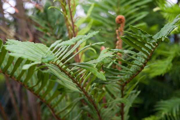 plants-for-a-jungle-style-border-fern-2