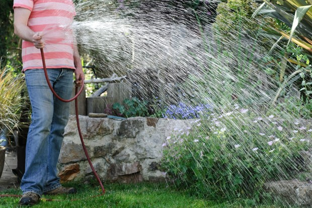Watering a lawn with a hose