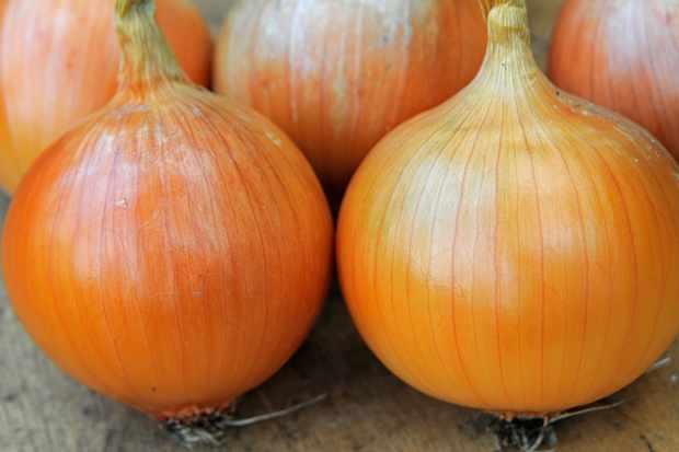 white-onions-3