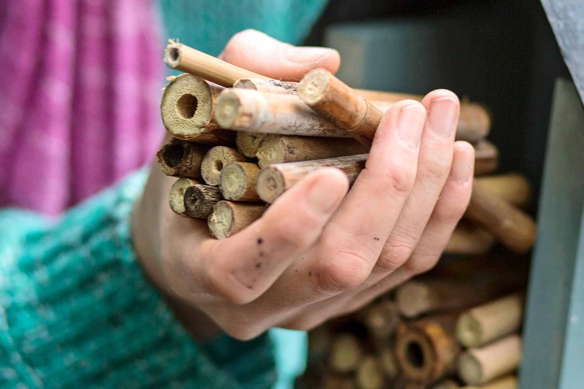 Make a Bee Hotel (In Pictures)