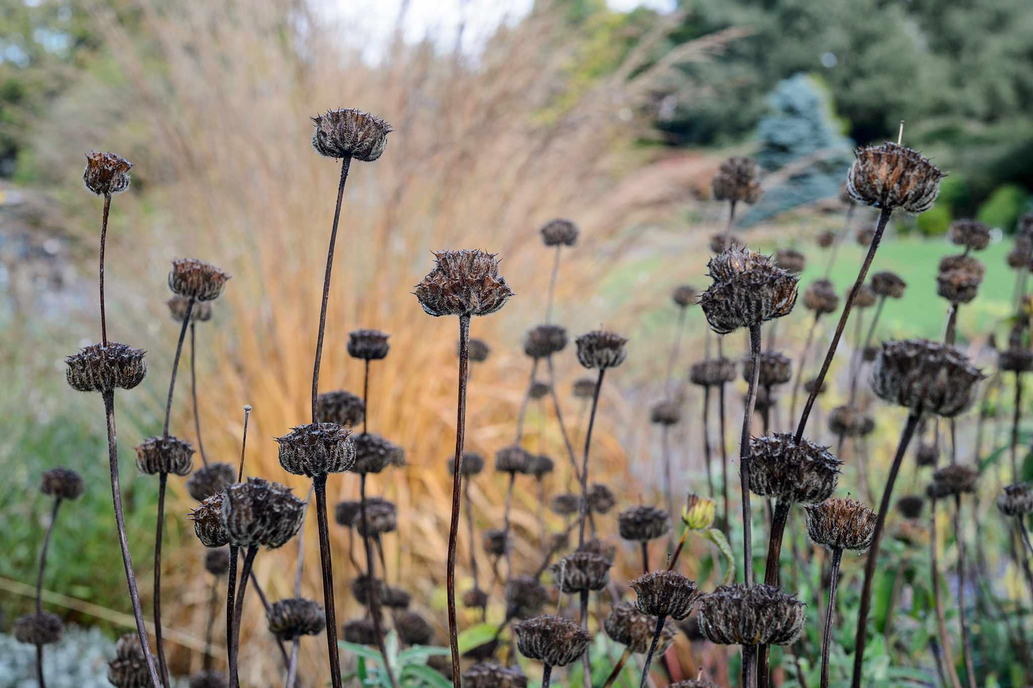 Seven Tips for a Great Winter Garden
