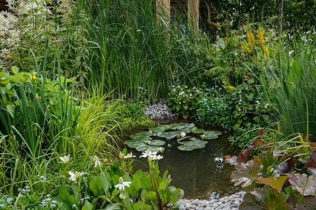 Ponds in shady gardens for Pond shade ideas