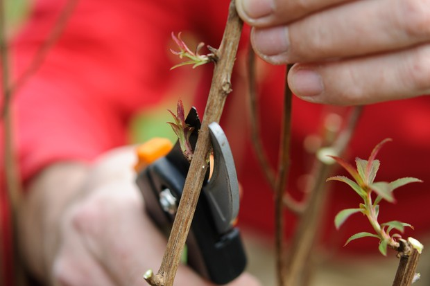How to prune your plants - pruning above a shoot