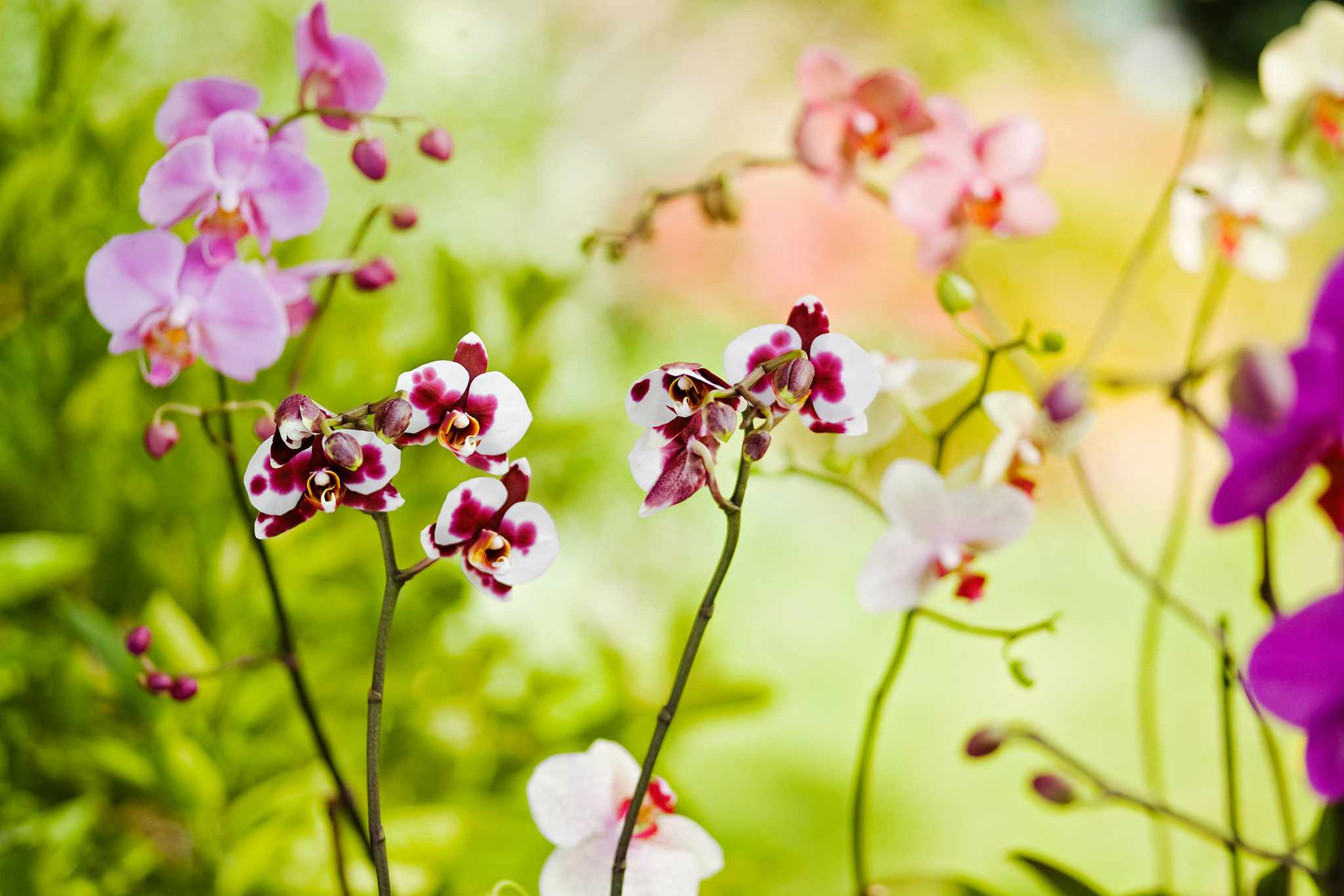 Top Mistakes when Growing Orchids
