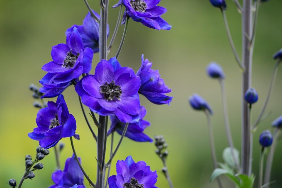 Perennials to Grow for Cut Flowers - BBC Gardeners' World Magazine
