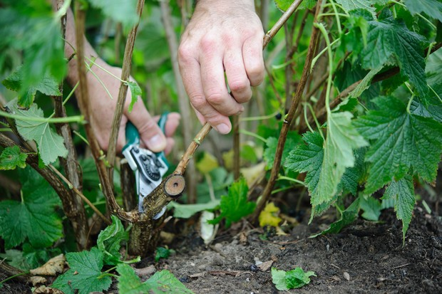 How to prune your plants - cutting out dead wood