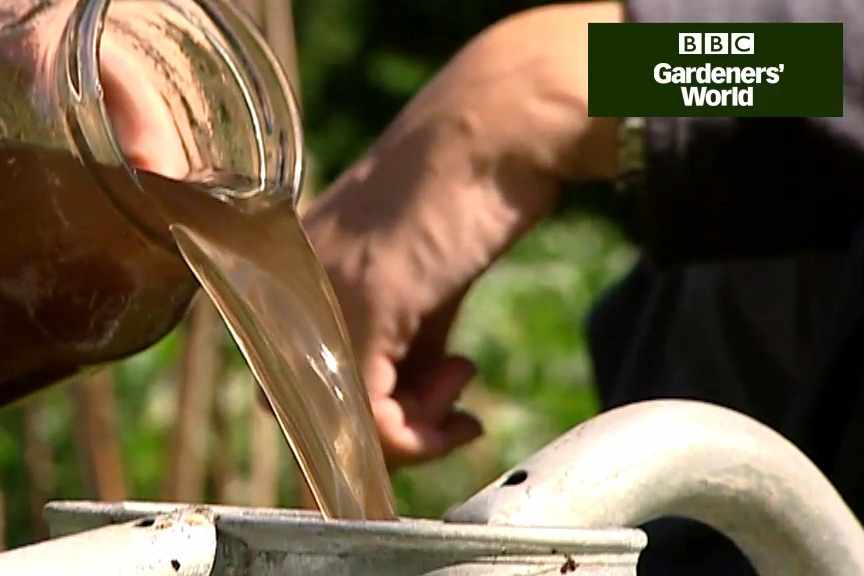 How to make a nettle feed