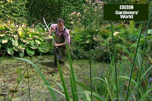 How to remove duckweed and blanketweed from ponds