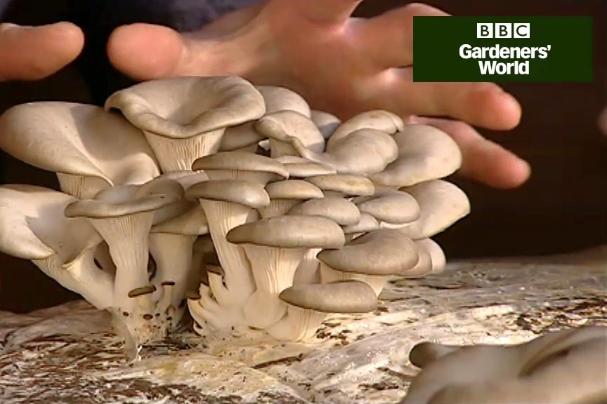 How to grow mushrooms video