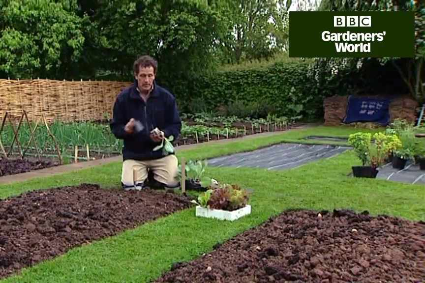 How to plant cabbages