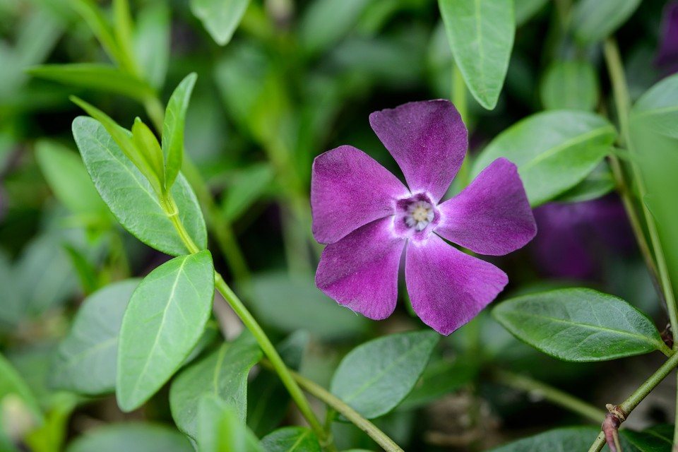 Best Plants To Grow Under Trees Bbc Gardeners World Magazine