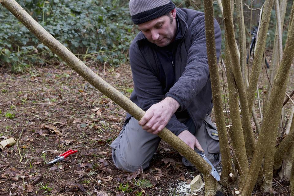 Coppicing And Pollarding Bbc Gardeners World Magazine