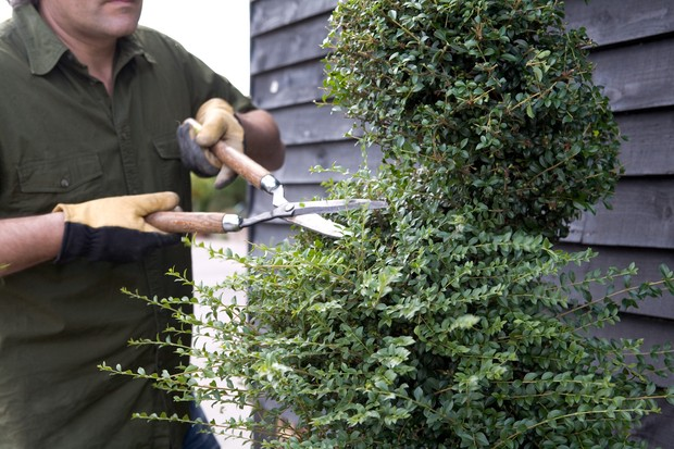 Trimming the topiary spiral