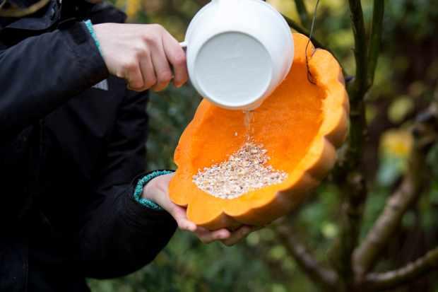 tipping-bird-seeds-into-pumpkin-2