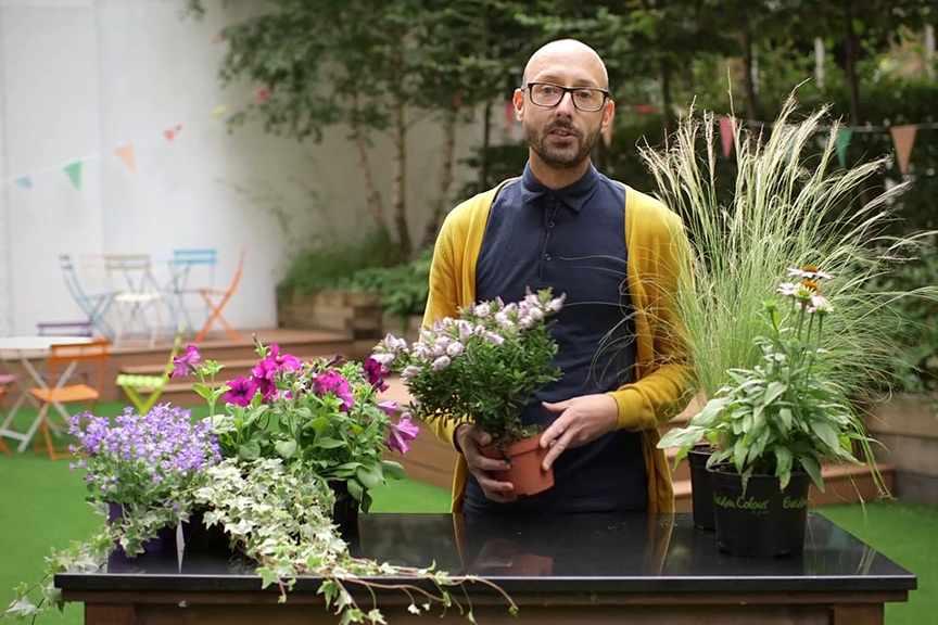Choosing plants for pots
