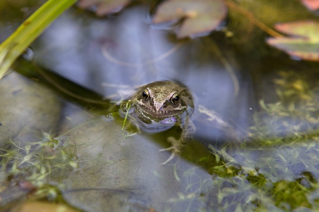 frog-in-a-pond-3