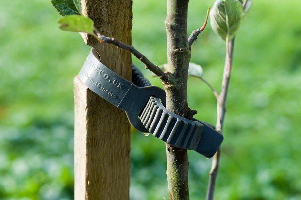 tree-stake-2