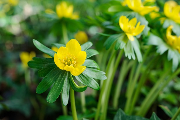 Plant To Help Bees Through Winter Into Spring Gardenersworld Com