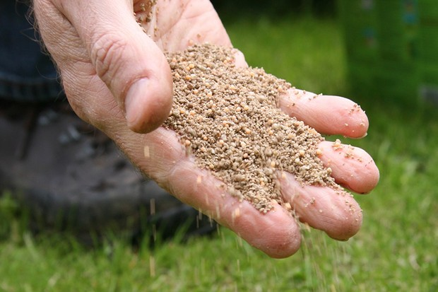 Lawn feed in hand