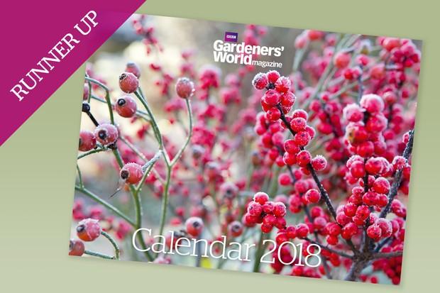 calendar-2018-runner-up-rosehips-and-winterberry-2