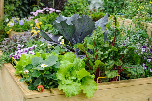 A raised bed planted with fruit, veg, salad, herbs and flowers