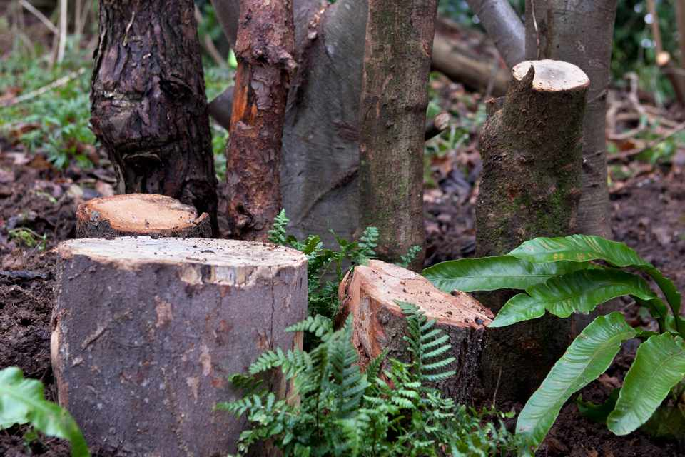 How to make a stumpery for insects