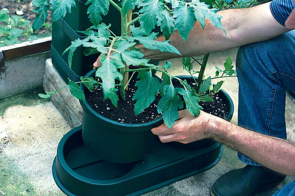 How to install an automatic watering system