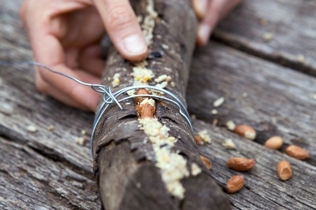 Stuffing suet into the cracks