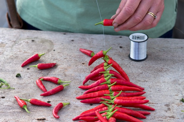 Preparing chillies for storing