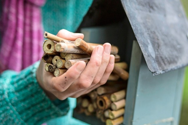 bee-hotel-with-bamboo-sticks-2